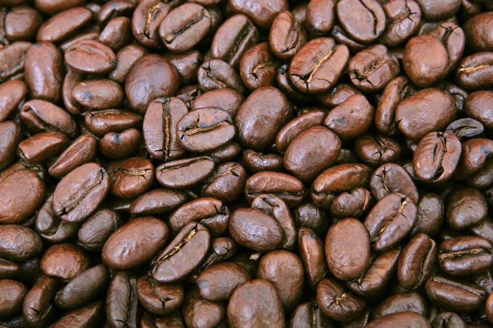 Il Kopi Luwak, uno dei caffè più costosi al mondo