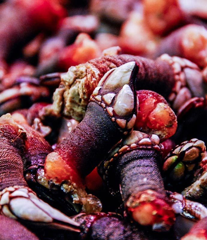 Percebes | Crostacei prelibati… e costosi