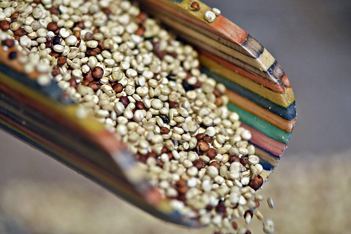 Semi di quinoa | Caratteristiche, curiosità e ricette